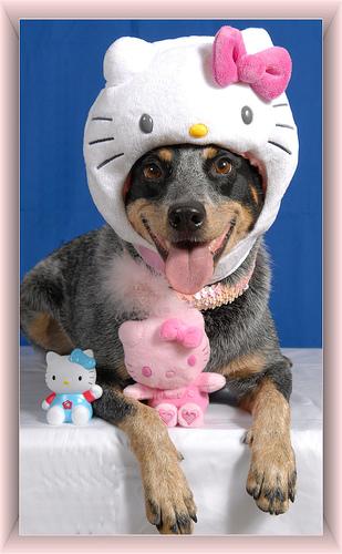 hello-kitty-face-dog.jpg